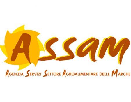 assam-wide-01